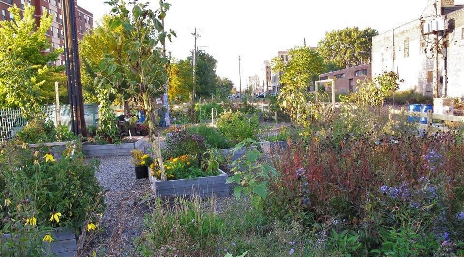 El Paseo Community Garden Credit Pilsen Alianza Verde