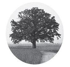 tree_final