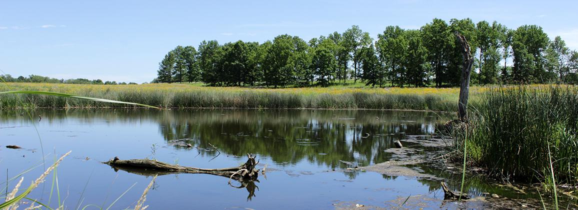 WetlandsRestoration