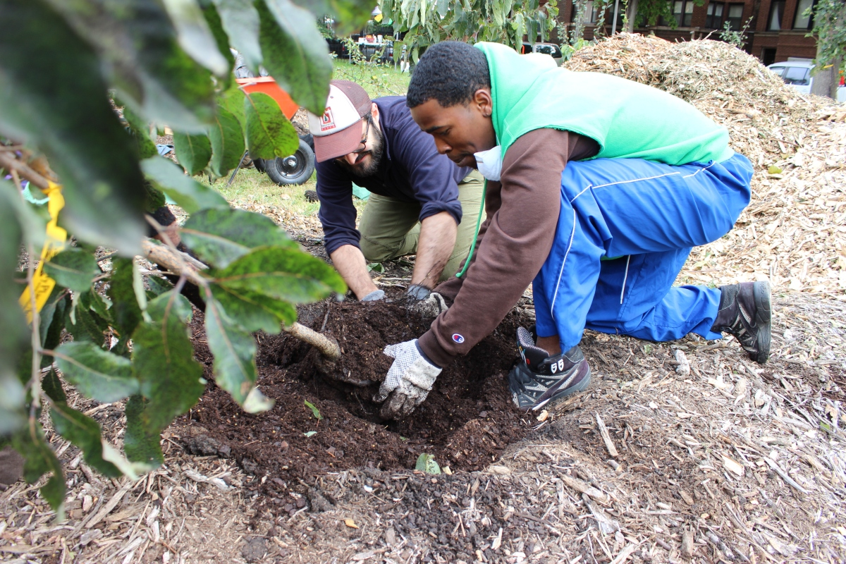 tree planting effects to the community Expert reviewed how to plant a tree four parts: deciding what kind of tree to plant preparing to plant a tree planting a tree caring for your tree community q&a planting a tree isn't as simple as digging a hole and throwing the tree into it.