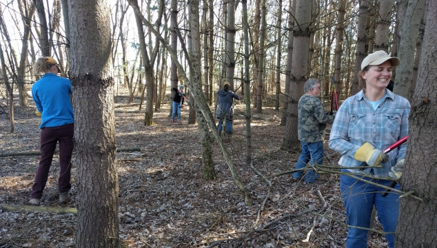 Volunteers help restore the Blackmon Tract at Hackmatack.