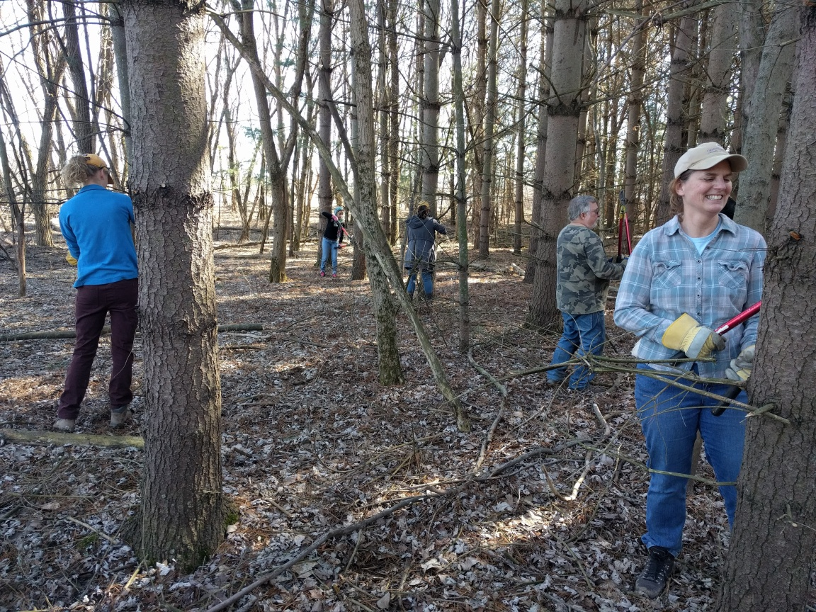 Volunteers help restore the Blackmon Tract at Hackmatack.