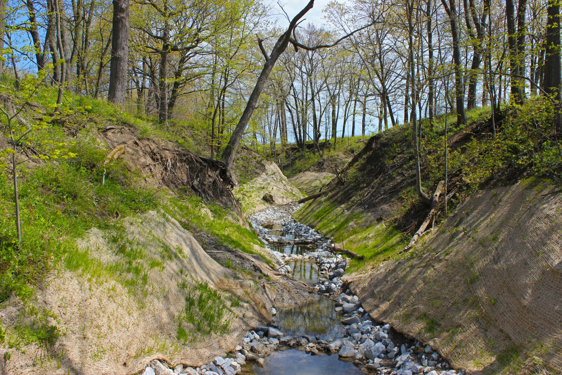 Van Horne Ravine May 2017