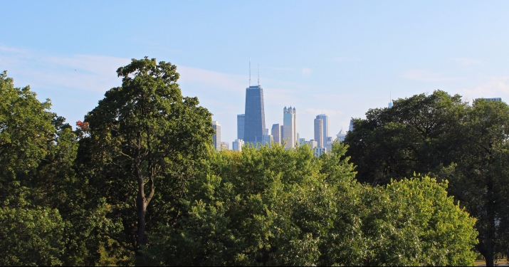 ChicagoTreeBoard