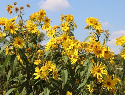 DGEflowers1