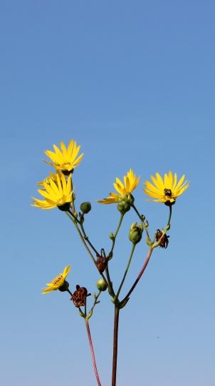 DGEflowers3